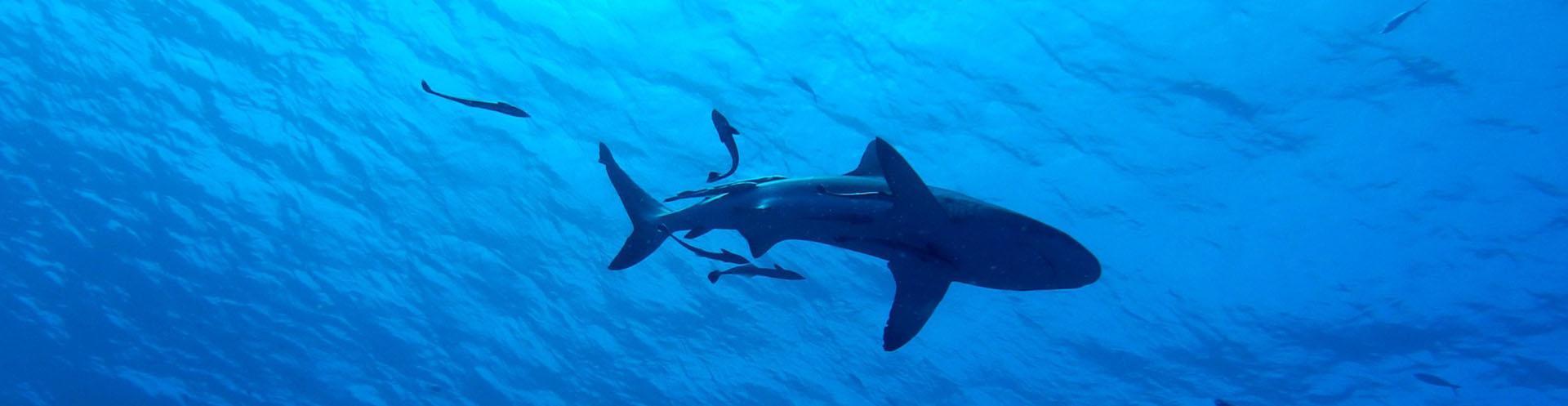 Shark Attack Risk from Wisely: A KSU News Blog