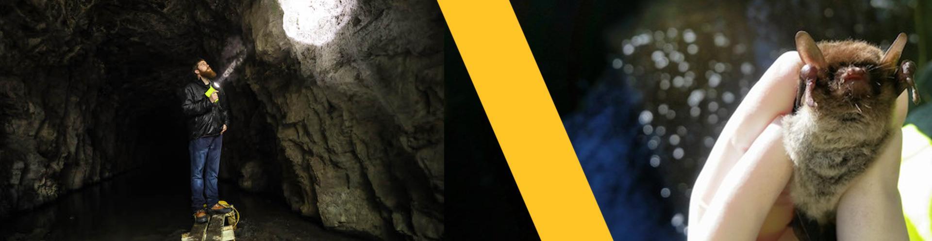 Saving Bats from Extinction