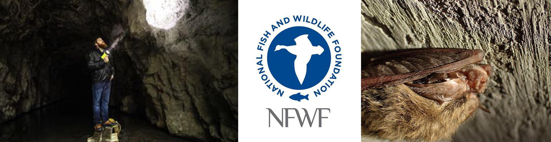 Multi-Year NFWF Grant Focuses on Bat Research