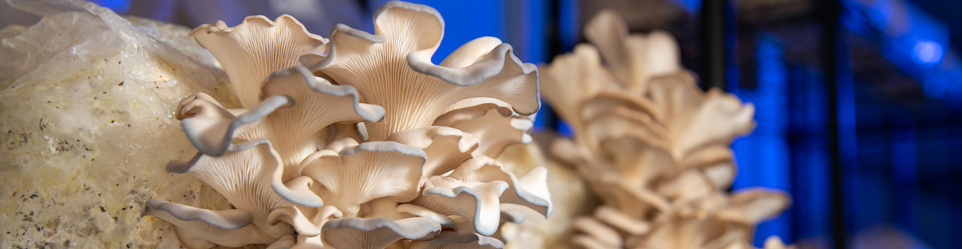 Mushrooms and Microbiology